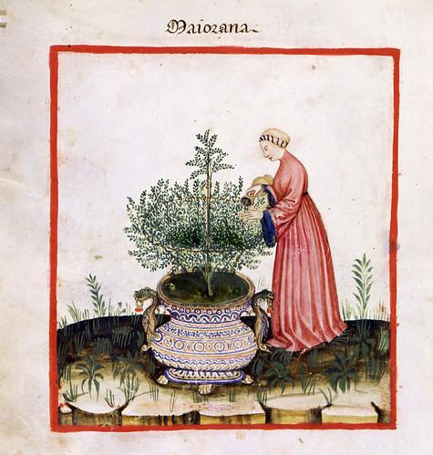 017- La mejorana hierba aromatica y medicinal-TACUINUM SANITATIS- Biblioteca Casanetense Ms. 4182