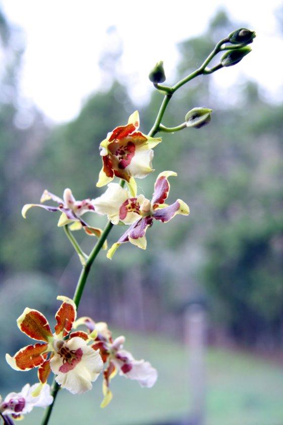 orquídea con flores