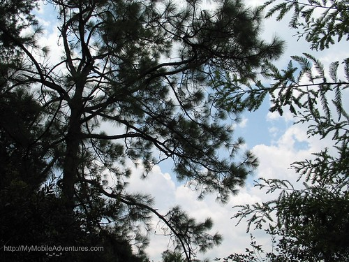 IMG_1565-Six-Mile-Cypress-sky-trees-clouds