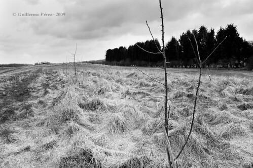 Hertfordshire Landscape 1