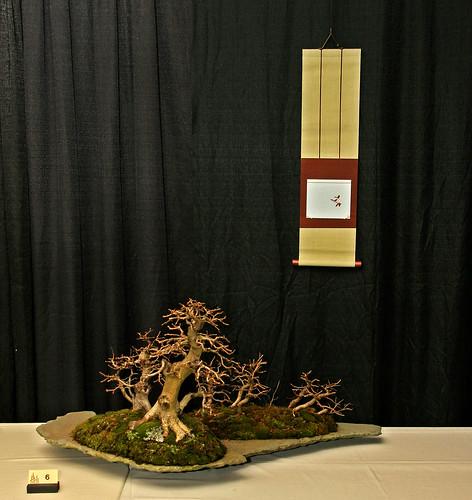 buy bonsai