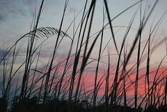 BeachCliche2 (radollison) Tags: beach subset dauphinisland
