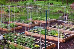 Lower Garden, 8 beds