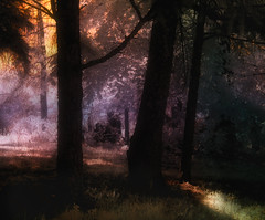 Morning's Light (DaraDPhotography) Tags: morning trees sunlight texture forest spring woods infrared lightroom cs4 sharingart awardtree magicunicornverybest selectbestfavorites sailsevenseas distressedjewelltextures
