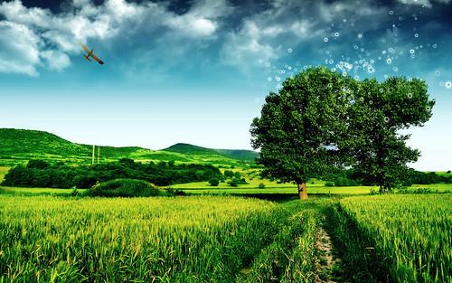 フリー写真素材, 自然・風景, 田畑・農場, 樹木, フォトアート,