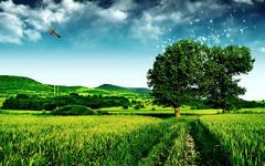 [フリー画像] 自然・風景, 田畑・農場, 樹木, フォトアート, 201107011900
