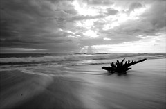 Silky Shore (Reto Togni Pogliorini) Tags: ocean sky blackandwhite bw sun beach ray driftwood shore stump rays stub clowds backwash sunray silky pazific actinism diamondclassphotographer bwartaward