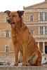 The Parliament's Guard (Ava Babili) Tags: dog parliament athens greece interestingness136 i500 mywinners abigfave explore28mar08