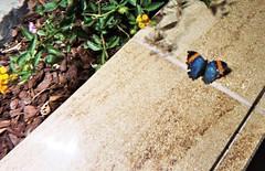 03.29.08 Butterfly Pavilion (5)