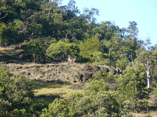 Coup de chasse Bopope Mai 2008 #16 : biches