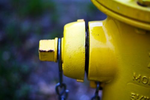 153/365 Yellow