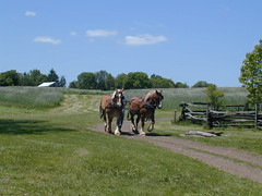 Horses in Mercer County, New Jersey