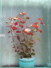 Thủy Sinh Tuấn Anh-Chuyên cây & Rêu Thủy Sinh, Cá Cảnh Biền & Hồ Cá Cảnh Biển - 26