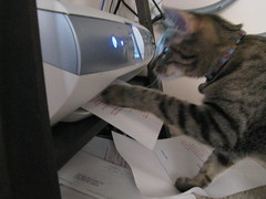 Maggie helping the printer
