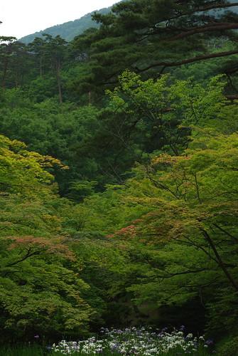 20080622032緑