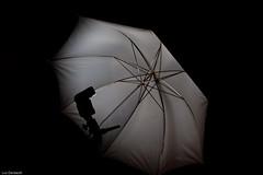 Strobist test (Luc Deveault) Tags: test canada umbrella quebec qubec luc strobist deveault lucdeveault