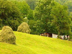 Hanging out (mi_chillin) Tags: green nature countryside peaceful calm serenity hay justbreathe nowind hangoutside peacefulnature forgetthecity