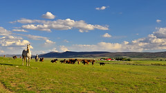 Dream Ranching (Fort Photo) Tags: ranch blue sky horses horse mountains nature field grass clouds barn rural landscape nikon farm country sunny wyoming prairie grassland 169 animalplanet grasslands wy loh d300 animaladdiction