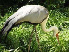 DSCF5984 (dondonnellyjr) Tags: animals zoo louisvillezoo