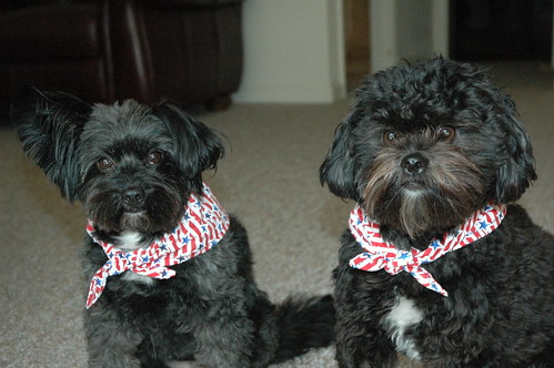 Doggies in their July 4th regalia