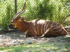 DSCF5960 (dondonnellyjr) Tags: animals zoo louisvillezoo