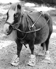 pony10