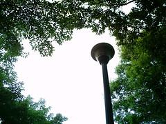 【写真】VQ3007で撮影した朝の風景(木々の間の街灯)