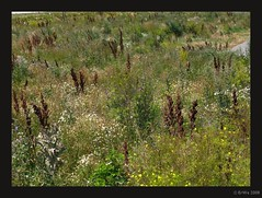 ruderalflaeche 2008-07 (Brigitte Rieser) Tags: flora forum niederösterreich loweraustria ruderalfläche ruderalarea erweblogged