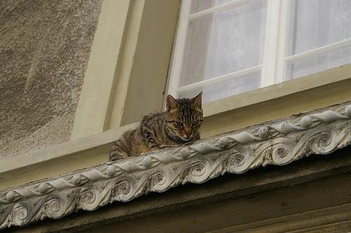 午後懶懶的小貓