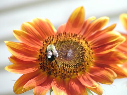 flowerbee8-08-08