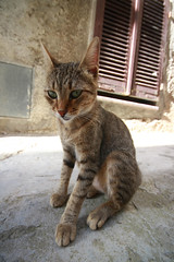 Non mi guardare sfidando... (Stranju) Tags: sardegna italy cat italia sardinia wide agosto gatto grandangolo vacanza castelsardo gaton sfida vaacanze