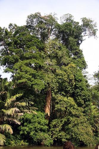 Costa Rica - Día 3 (266)