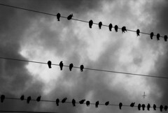 It's a Bird, It's a Plane (JTContinental) Tags: seattle urban blackandwhite bird skyscape bigmomma photofaceoffwinner pfogold pfosilver