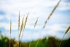grass (poopoorama) Tags: sky beach grass clouds washington nikon sigma everett printme d300 jettyisland 1850mmf28exmacrohsm featuredonadidapcom