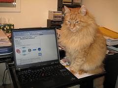 Neko not giving a damn that I have to work 2 (drayy) Tags: orange cat computer ginger furry keyboard desk laptop fluffy mainecoon neko paws cc400 cc300 cc200 cc100 cc500 cc600 oreengeness bestofcats thebiggestgroupwithonlycats