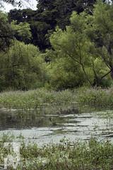Swamp (PAL1970) Tags: naturaleza latinamerica nature canon guatemala pantano swamp latinoamerica centroamerica eos30d pal1970