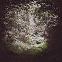 (Ana Cuba) Tags: claro wood light tree helecho luz madera agua explore galicia fairy bosque rbol lugo magia ramas vilalba corbelle