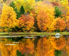 Autumn Gold (Stanley Zimny) Tags: park autumn trees lake ny reflection tree fall nature colors leaves yellow rock automne catchycolors gold mirror leaf colorful colours seasons natural fallcolors autumncolors fourseasons reflexions 72 autumnal t4 colorexplosion 4seasons naturesfinest supershot visiongroup top20autumn vision100