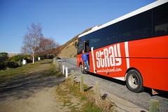 Stray Bus