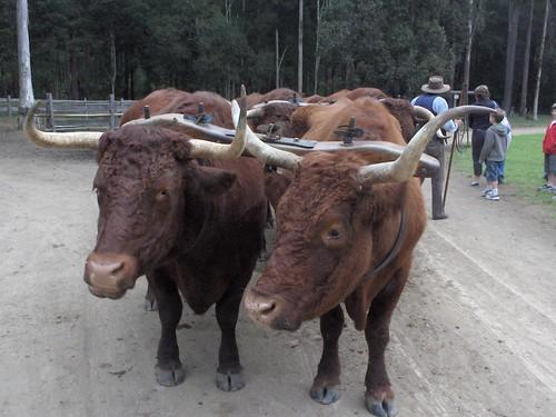 Con los Bullocks