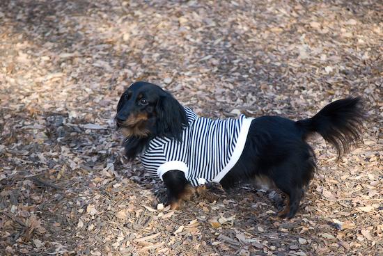 yoyogi dogs_0903