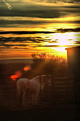 The Wild West (of Scotland) (Dan Baillie) Tags: sunset horse field scotland nikon the dumfriesandgalloway puddock wigtownshire equinephotography platinumphoto danbaillie equestrianphotography kirkcowan bailliephotographycouk bailliephotography wigtownshirephotographer dumfriesandgallowayphotography