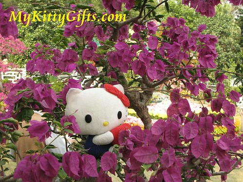 Hello Kitty Climbing Purple Azalea in Hong Kong Orchid Trip