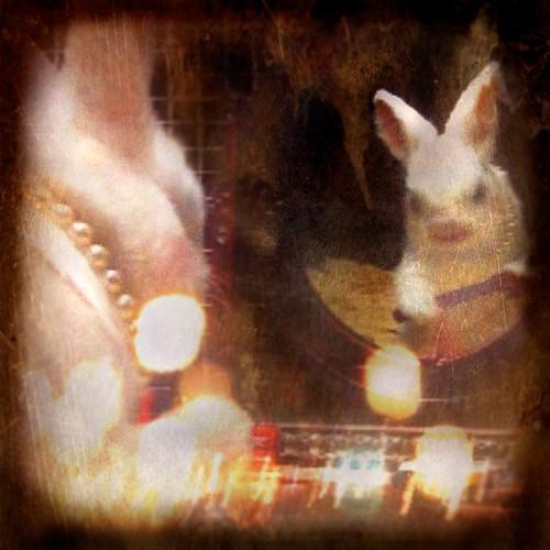 Rabbit #3