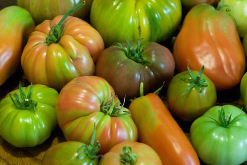 tomato menegerie 2