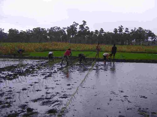 Pertanian   Pemanfaatan sumber daya hayati
