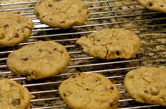 Chocolate Chip Cookies (OakleyOriginals) Tags: boys cookies batch teenagers delicious sweets bake chocolatechips chocolatechipcookies