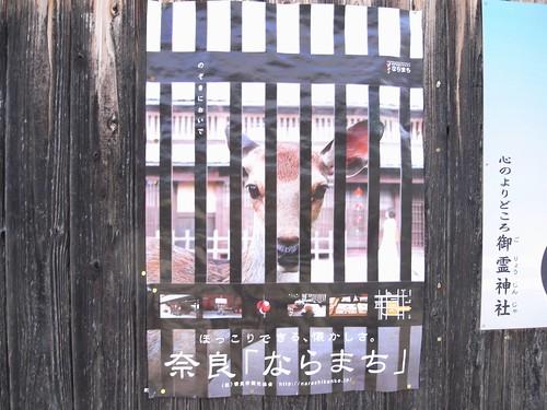 早朝の東大寺(鹿たち)-22