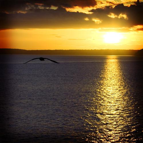birdie sunset