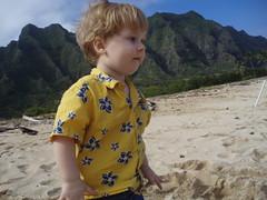 more critter (Llyra) Tags: vacation hawaii oahu christopher 2009 kualoabeach